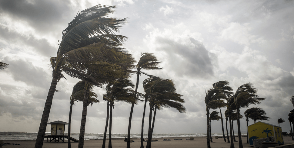 Palm trees blowing in the wind during a storm