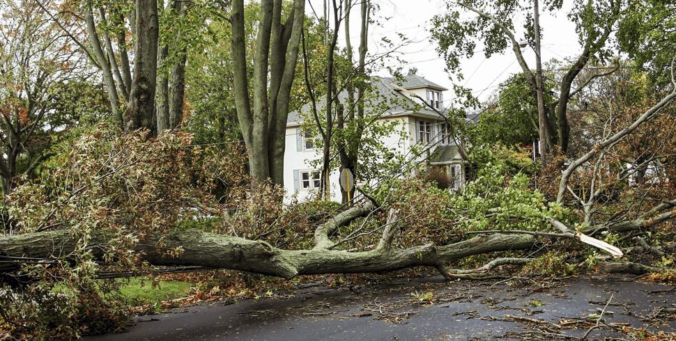 Tree debris in road